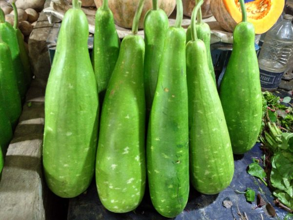 Bottle_gourd_of_Bangladesh