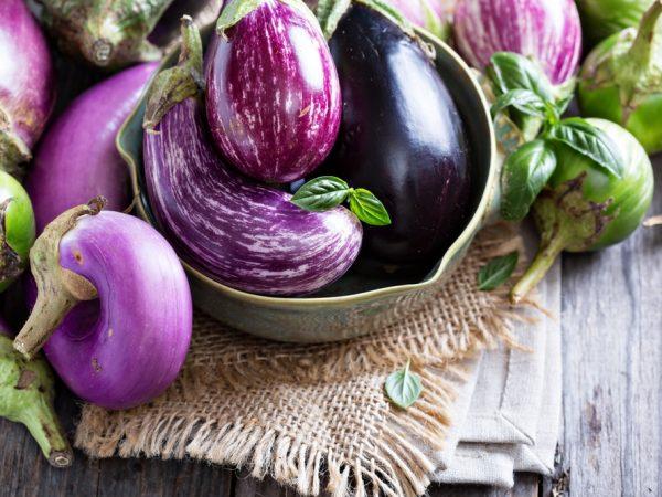 Brinjal (Eggplant)